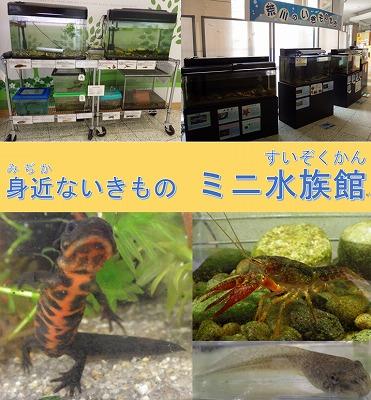 ゴールデンウィーク特別企画「身近ないきもの ミニ水族館」