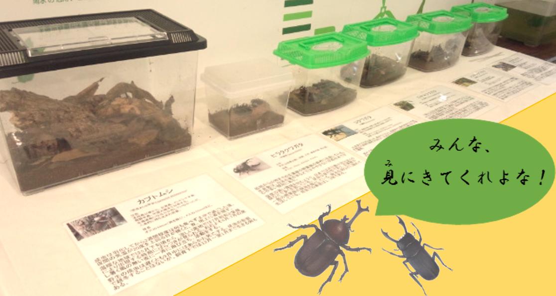 夏休み特別展示 カブトムシ・クワガタムシ