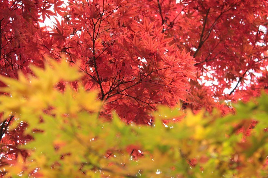 【秋】和文化をもっと知ろう!日本の歳時記と年中行事