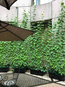 2019年6月2日(日) 緑のカーテン育成講習会 in エコポリスセンター