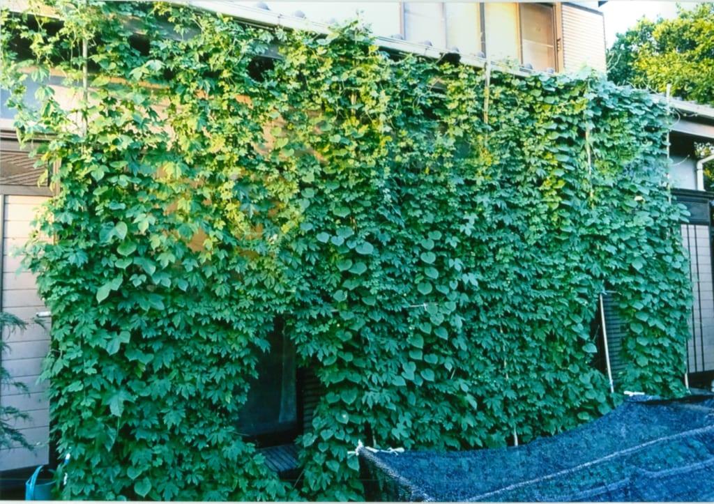第18回環境なんでも見本市(2月2日・3日)出展団体の紹介(●ブースNo.46板橋区エコポリスセンター 緑のカーテンコンテスト