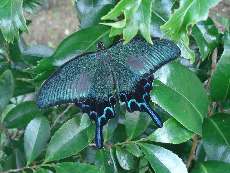 「板橋で見られる蝶 写真展」 人気投票結果は?
