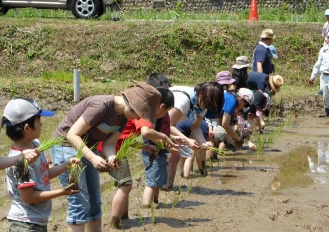 6月8日(土)里山で田植え体験をしよう!無事終了