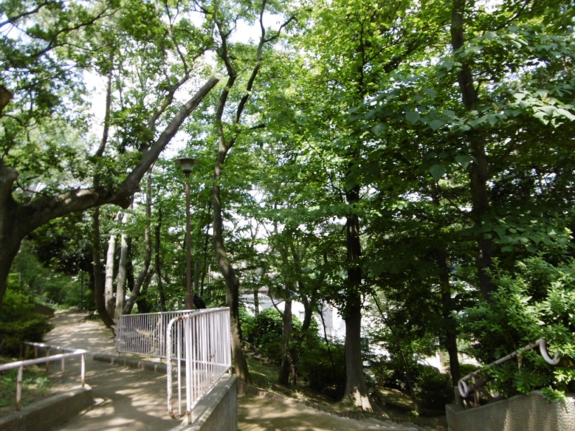 「安全で自然豊かな崖線樹林地を未来に引き継ごう」