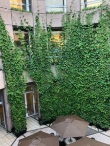 エコサークル緑のカーテン生長記録 2019