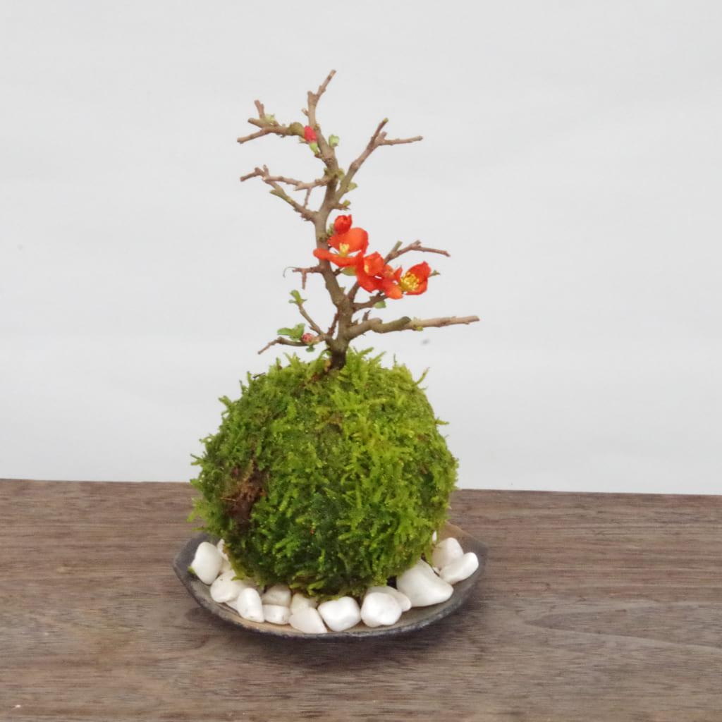【中止】環境講座「季節のおすすめで作る苔玉」