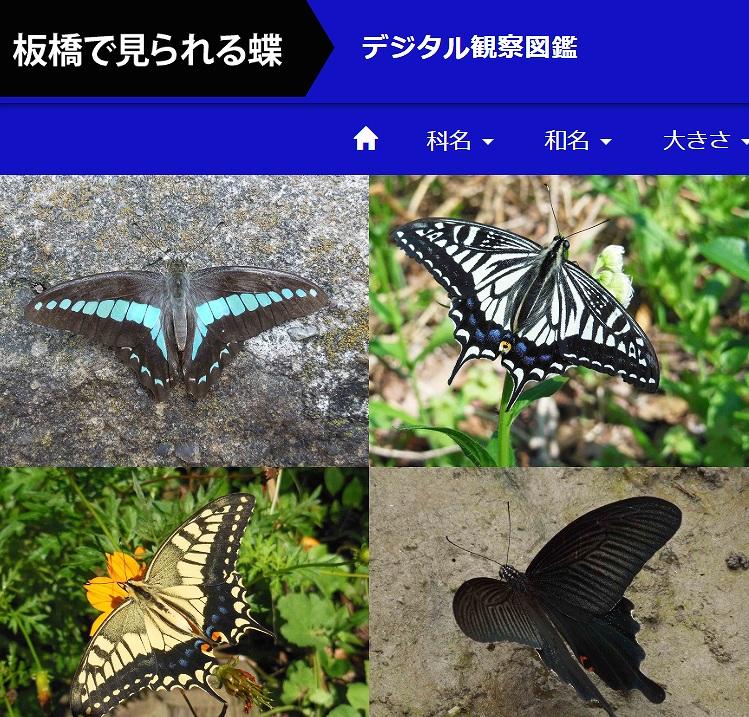 こんなときでも楽しめます!「板橋で見られる蝶 デジタル観察図鑑」