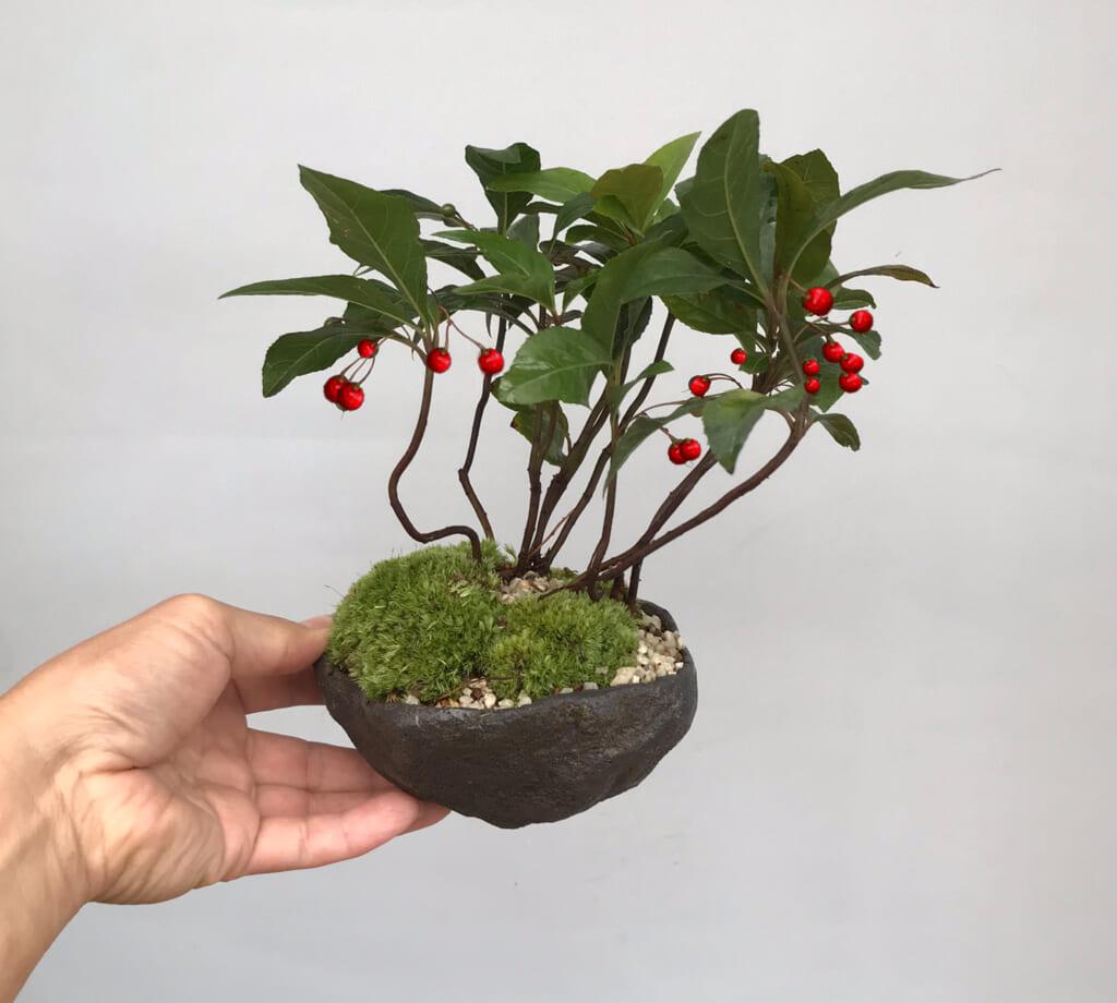【申込終了】環境講座「お正月に飾るミニ盆栽」