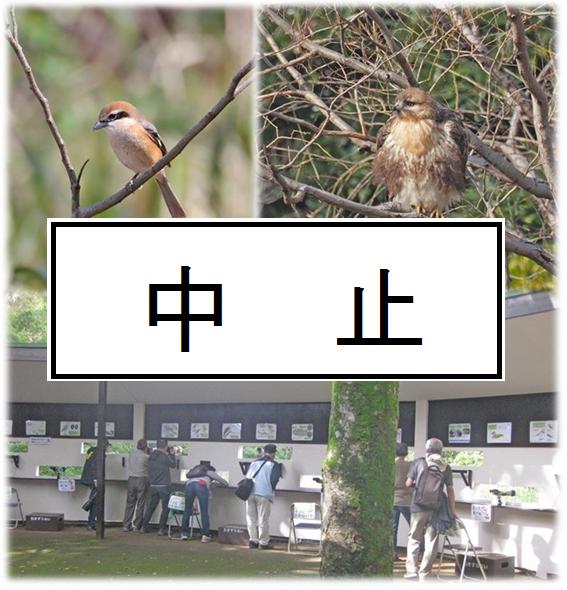 中止のお知らせ「冬鳥観察会」