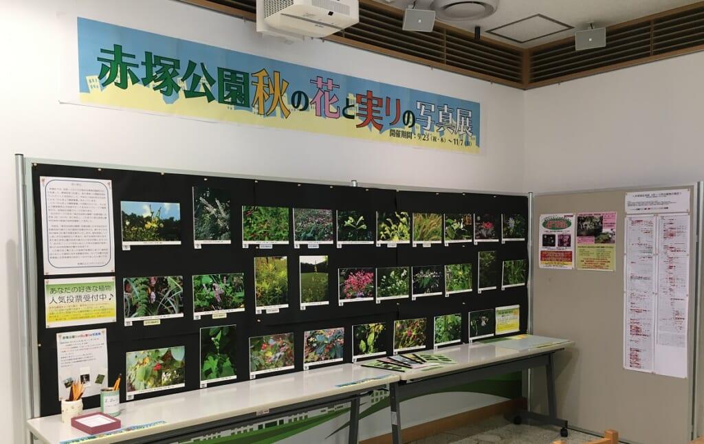 「赤塚公園秋の花と実りの写真展」開催中