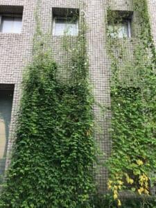 「エコガーデン」緑のカーテン生長記録 2021