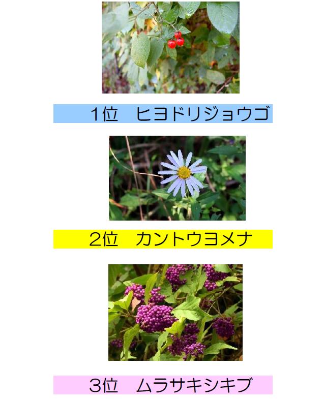 「赤塚公園秋の花と実りの写真展」人気投票結果発表(前期)